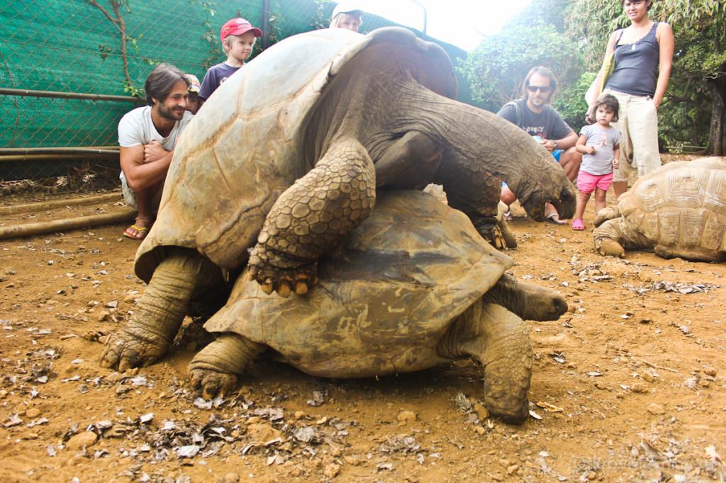 Парк черепах на Маврикии. маврикий экскурсии отзывы и цены