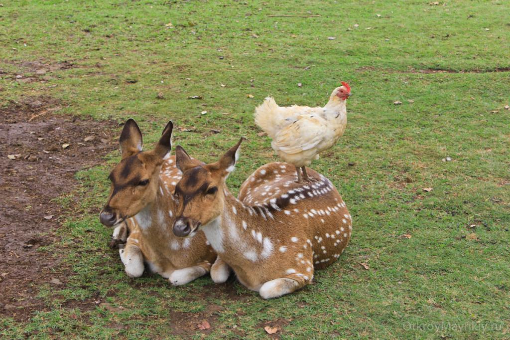 Парк животных и птиц Касела - там классно! маврикий экскурсии отзывы и цены