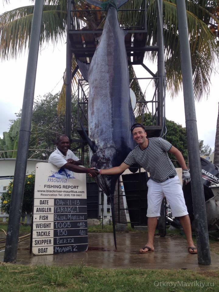 Марлин весом 460 кг был пойман на рыбалке. Маврикий