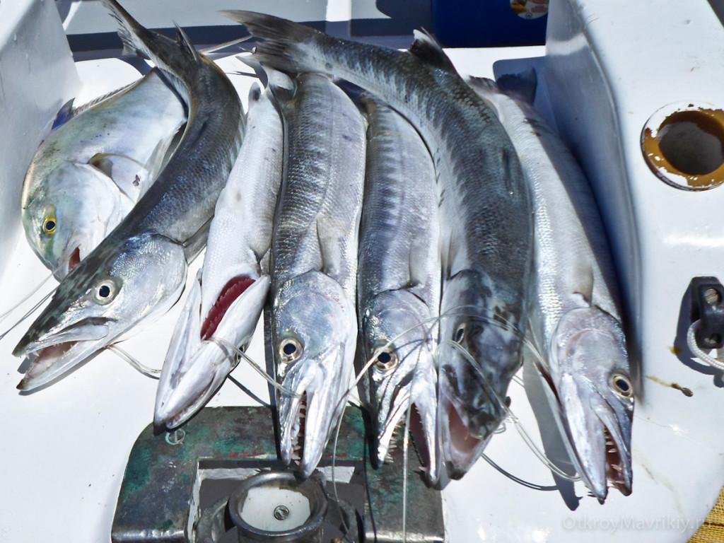 Небольшой улов. Рыбалка на Маврикии.