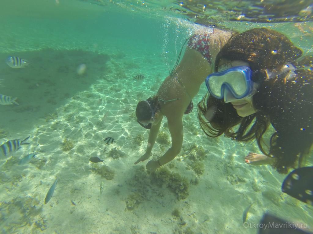 Где можно посмотреть рыбок и кораллы