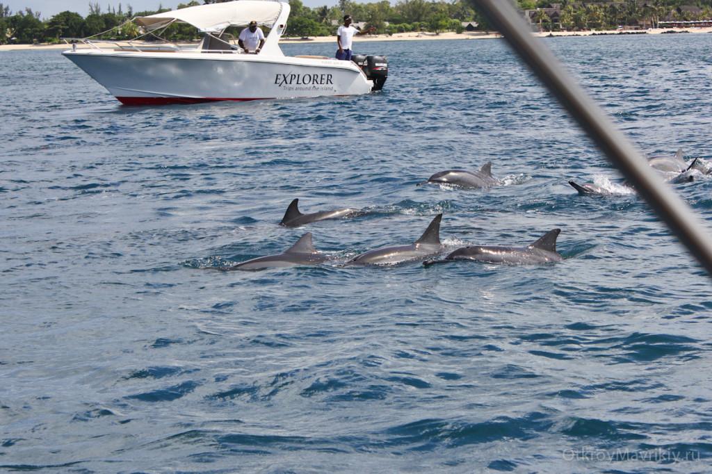 Дельфины подплывают прямо к лодке