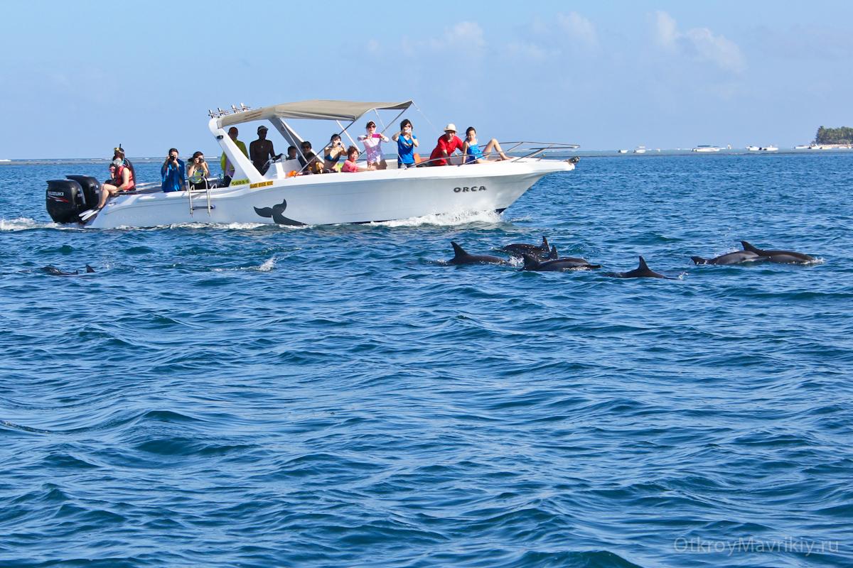 Цена экскурсии по Маврикию зависит от того, где и у кого вы её покупаете