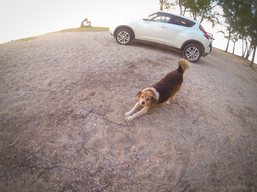 Собачка с пляжа Леморне