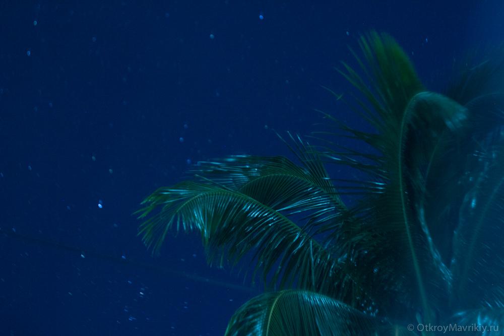 Ночь на Маврикии