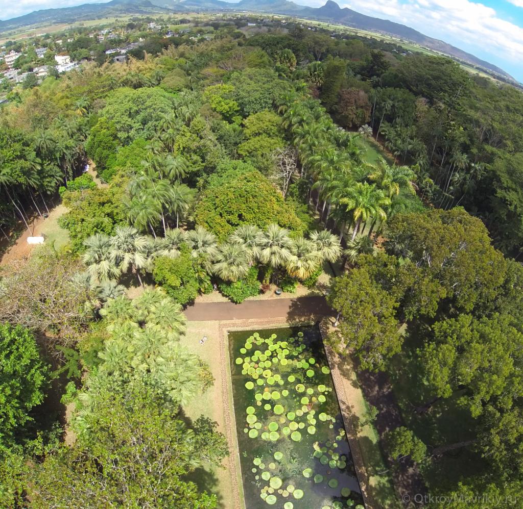 Ботанический сад «Памплемус» (Pamplemousses). Вид сверху