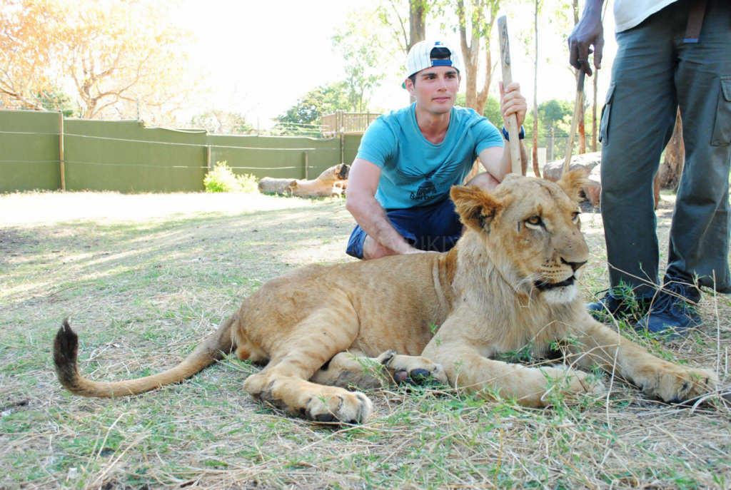 В парке Каселла вместе со львами. Маврикий