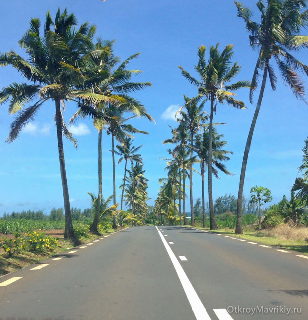 Пальмовая дорога на Маврикии