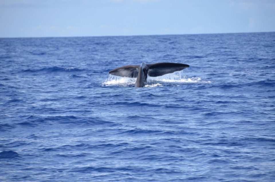 Если повезёт, во время дайвинга можно увидеть кита на Маврикии